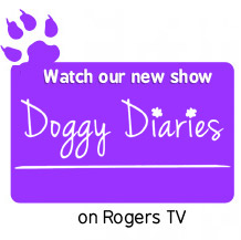 Dog Training, Obedience | London Ontario Dog Trainers